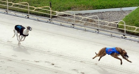 Dog Racing Palm Beach Results Kennel Club Race The Best Beaches In World
